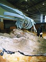 20041101whale.jpg